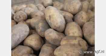 Late vorst en sneeuw bedreigt Zweedse nieuwe aardappelen - AGF.nl