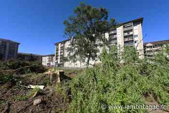 À Aurillac, des arbres abattus à la Montade provoquent la colère des habitants : on vous explique pourquoi - Aurillac (15000) - La Montagne