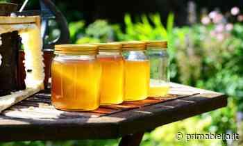 Aumenta il consumo di miele in pandemia - Eco di Biella