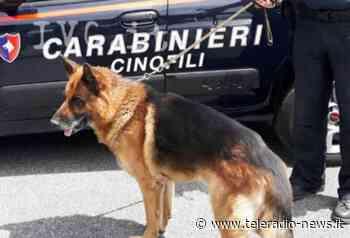 Maddaloni. 'Mini market della droga' con 'base' in un muro scoperto dai cani: arrestati due 33enni - TeleradioNews