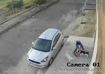 Vídeo: Pitbull ataca outro cão no bairro Belo Horizonte em Varginha - Varginha Online