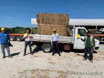 JESI / Società agricola Zannini, 15 quintali di fieno per gli animali del Parco Zoo - QDM Notizie