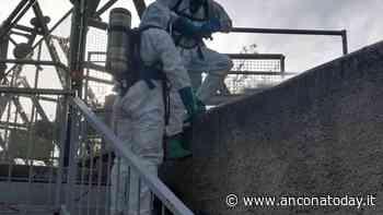 Il povero capriolo cade nel canale di scolo della centrale idroelettrica, intervengono pompieri e WWF - AnconaToday