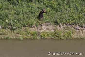 North Saskatchewan River level expected to rise next week - CTV News Saskatoon