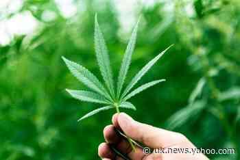 Virginia decriminalises possession of cannabis