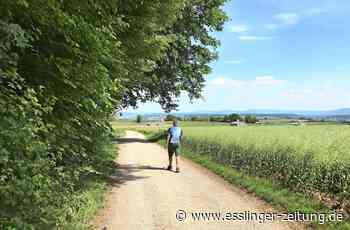 Wandertipp im Kreis Esslingen: Zu Fuß Filderhochebene - Kreis - esslinger-zeitung.de