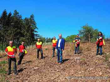 Engen: Waldarbeiter bezwingen Corona-Krise: In vergangenen Wochen 18.000 neue Bäume gepflanzt - SÜDKURIER Online