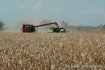 La soja y el maíz cerraron con bajas en Rosario - El Litoral