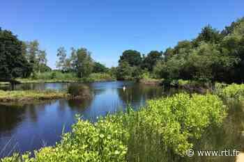 Idée vacances en France : le parc ornithologique du Teich dans le Bassin d'Arcachon - RTL.fr