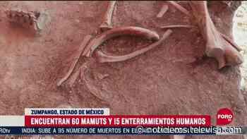 Hallan restos de 60 mamuts en Zumpango, Edomex - Noticieros Televisa