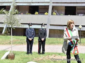 Castellanza, 38 decessi in due mesi, 10 per Covid. Un ulivo al cimitero per ricordarli - malpensa24.it
