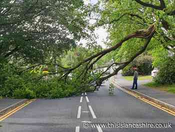 Tree falls on Chapeltown Road, Bromley Cross - This Is Lancashire