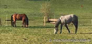 Comment les chevaux du centre du Cautivo, près de Dreux, ont vécu la crise sanitaire - Dreux (28100) - Echo Républicain
