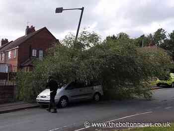 The trees that fell across Bolton as wind battered town - The Bolton News