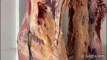 Asociación Ganadera Local de Chapala dona mil kilos de carne - UDG TV