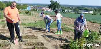 Integration am Zucchini-Beet: Interkultureller Garten in Karlsbad wächst und gedeiht - BNN - Badische Neueste Nachrichten