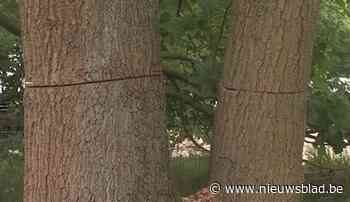 Meer dan honderd bomen beschadigd met kettingzaag in domein De Liereman