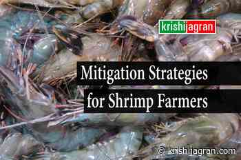 Covid-19: College of Fisheries Organizes Industry- Farmer- Academia Webinar for Shrimp Farmers - Krishi Jagran