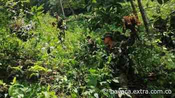 En zona rural de Otanche, Boyacá oficiales del Ejército encontraron más cultivos ilícitos - Extra Boyacá