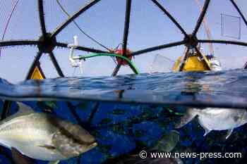 President Trump's order on aquaculture draws environmental concerns for Gulf fisheries - News-Press