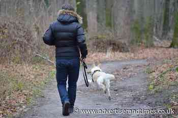 Campaign to educate owners on responsible dog walking in the New Forest - New Milton Advertiser and Lymington Times