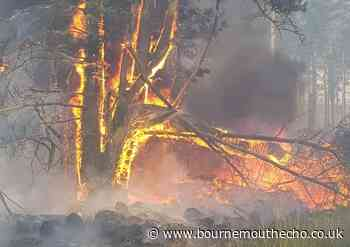 New Forest authorities on high alert over fire risks - Bournemouth Echo