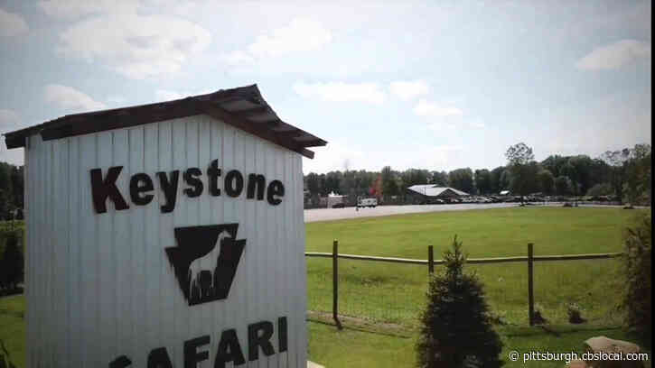 Keystone Safari Opening For Drive-Thru Tours This Week