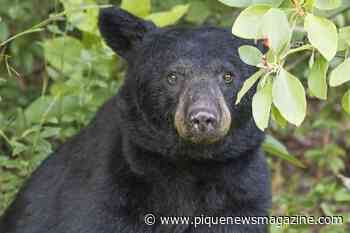 Scare those bears