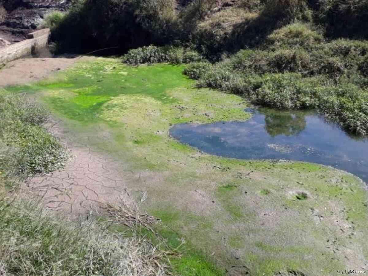 Rodízio no abastecimento de água em Palmeira é suspenso pela Sanepar - G1