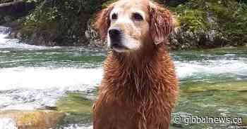 Search continues for dog washed over waterfall in Lynn Canyon