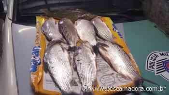 PMA flagra infratores praticando pesca ilegal no Rio Mogi Guaçu em Pirassununga (SP) - Portal Pesca Amadora Esportiva