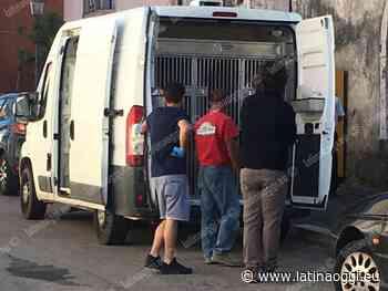 Cinquanta cani in un appartamento, l'intervento della Polizia Locale - latinaoggi.eu