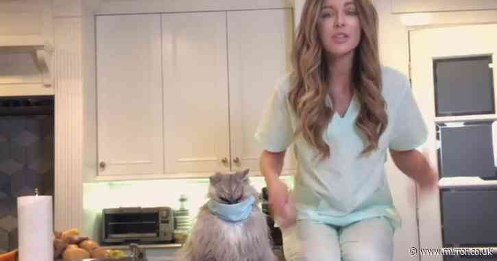 Kate Beckinsale's cat Clive looks furious as she puts a facemask on him - Mirror Online