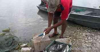 Pesca se reduce a casi nada en Ciudad Valles - Pulso de San Luis