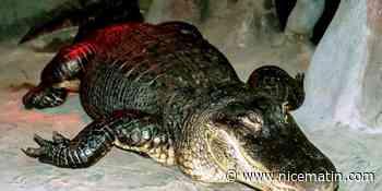 Alligator légendaire, Saturne est mort à 84 ans au zoo de Moscou ce week-end