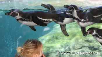 Zoos spüren starkes Besucher-Interesse: Zeitslots ausgebucht - Süddeutsche Zeitung