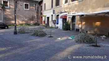 Trastevere: nella piazza della movida abbattuti tre alberi d'ulivo