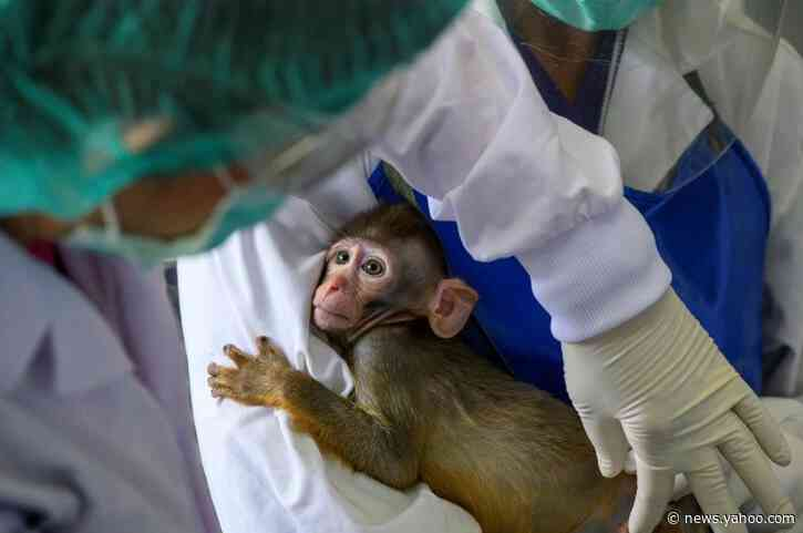 Thailand enters global race for vaccine with trials on monkeys