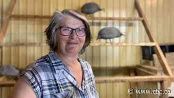 Got ticks? One Sask. woman says try guinea fowl