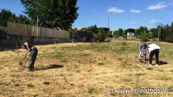 Tor Sapienza, i cittadini di 'Alberi in periferia' piantano 6 ulivi