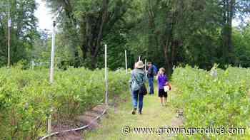 Florida Growers Show Ingenuity as Coronavirus Unfolds