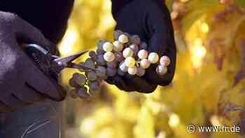 Weinfeste abgesagt | Oberursel - fr.de