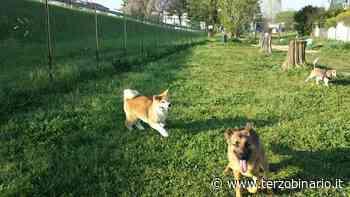 Cerveteri: sanificazione al dog park di Cerenova, intervento della Multiservizi Caerite - TerzoBinario.it