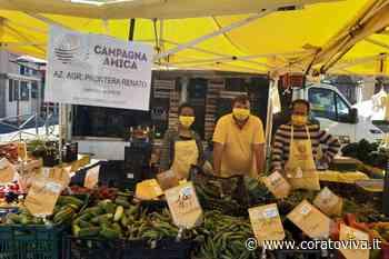 Gelate in Puglia, perdita fino all'80% di ciliegie - CoratoViva