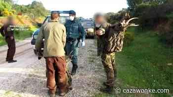 Dos furtivos decapitan cuatro gamos y un órix cimitarra en una reserva animal de Sevilla - Caza Wonke