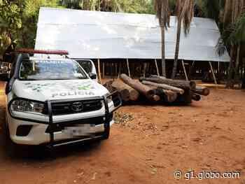 Polícia Ambiental apreende toras de madeira nativa em Ilha Solteira - G1