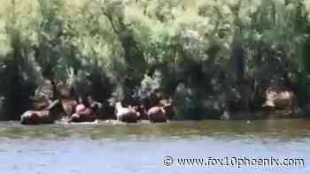 Video shows kayaking man appearing to harass Salt River wild horses - FOX 10 News Phoenix