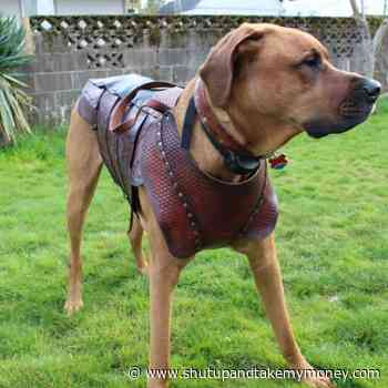 Leather Armor For Your Dog!