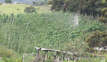 Fortalecen producción agrícola en Cácota - La Opinión Cúcuta