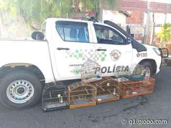 Morador de Rancharia leva multa de R$ 4 mil por manter aves silvestres em cativeiro - G1